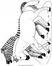 animali/zebre/zebra.jpg