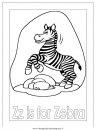 animali/zebre/zebra003.JPG