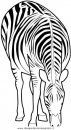 animali/zebre/zebra1.JPG