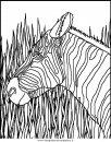 animali/zebre/zebra_27.JPG