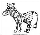 animali/zebre/zebra_28.JPG