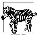 animali/zebre/zebra_33.JPG