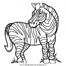 animali/zebre/zebra_36.JPG