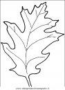 natura/alberi/piante_alberi_13.JPG
