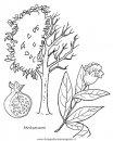 natura/alberi/piante_alberi_35.JPG