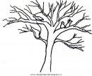 natura/alberi/tronco_7.JPG