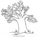 natura/alberi_speciali/baobab_1.JPG