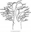 natura/alberi_speciali/baobab_3.JPG
