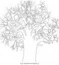 natura/alberi_speciali/baobab_4.JPG