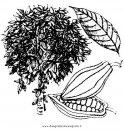 natura/alberi_speciali/cacao_3.JPG
