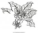 natura/alberi_speciali/caffe_03.JPG