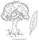 natura/alberi_speciali/castagno.JPG