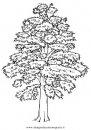 natura/alberi_speciali/cedro.JPG