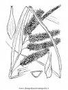 natura/alberi_speciali/cipresso_1.JPG