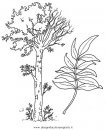 natura/alberi_speciali/frassino.JPG