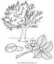 natura/alberi_speciali/pistacchio.JPG