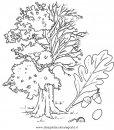 natura/alberi_speciali/quercirovere.JPG