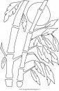 natura/arbusti/bambu2.JPG