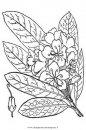 natura/arbusti/rododendro_maximo.JPG