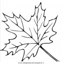 natura/autunno/natura_autunno_foglie_24.JPG