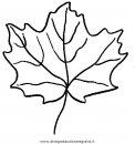 natura/autunno/natura_autunno_foglie_29.JPG