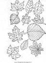 natura/autunno/natura_autunno_foglie_40.JPG