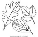 natura/autunno/natura_autunno_foglie_47.JPG