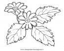 natura/fiori/fiore_anemone.JPG