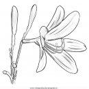 natura/fiori/fiore_arancio-2.JPG