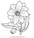 natura/fiori/fiore_dalia.JPG