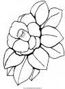 natura/fiori/fiore_fiori_182.JPG