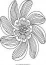 natura/fiori/fiore_fiori_204.JPG