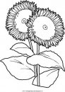 natura/fiori/fiore_fiori_210.JPG