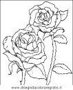 natura/fiori/fiori_fiore_019.JPG