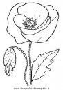 natura/fiori/fiori_fiore_035.JPG