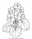 natura/fiori/fiori_fiore_047.JPG