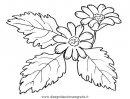 natura/fiori/fiori_fiore_051.JPG