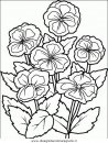 natura/fiori/fiori_fiore_067.JPG