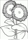 natura/fiori/fiori_fiore_081.JPG