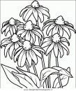 natura/fiori/fiori_fiore_082.JPG