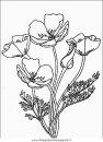 natura/fiori/fiori_fiore_091.JPG