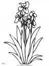 natura/fiori/fiori_fiore_108.JPG