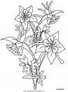 natura/fiori/fiori_fiore_130.JPG