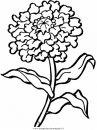 natura/fiori/fiori_fiore_138.JPG