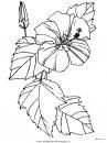 natura/fiori/fiori_fiore_153.JPG