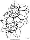 natura/fiori/fiori_fiore_164.JPG