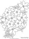 natura/fiori/fiori_fiore_165.JPG