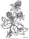 natura/fiori/fiori_fiore_166.JPG