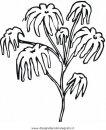 natura/fiori/gelsomino_gelsomini_01.JPG