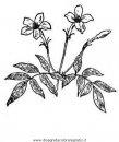 natura/fiori/gelsomino_gelsomini_03.JPG
